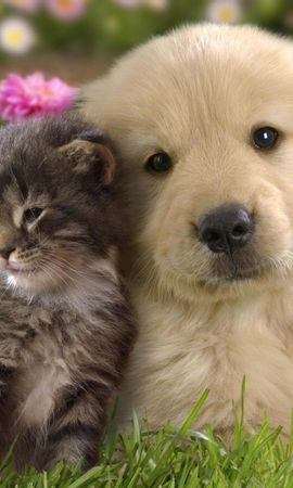 103542 download wallpaper Animals, Puppy, Kitty, Kitten, Grass, Couple, Pair, Friendship, Flowers screensavers and pictures for free