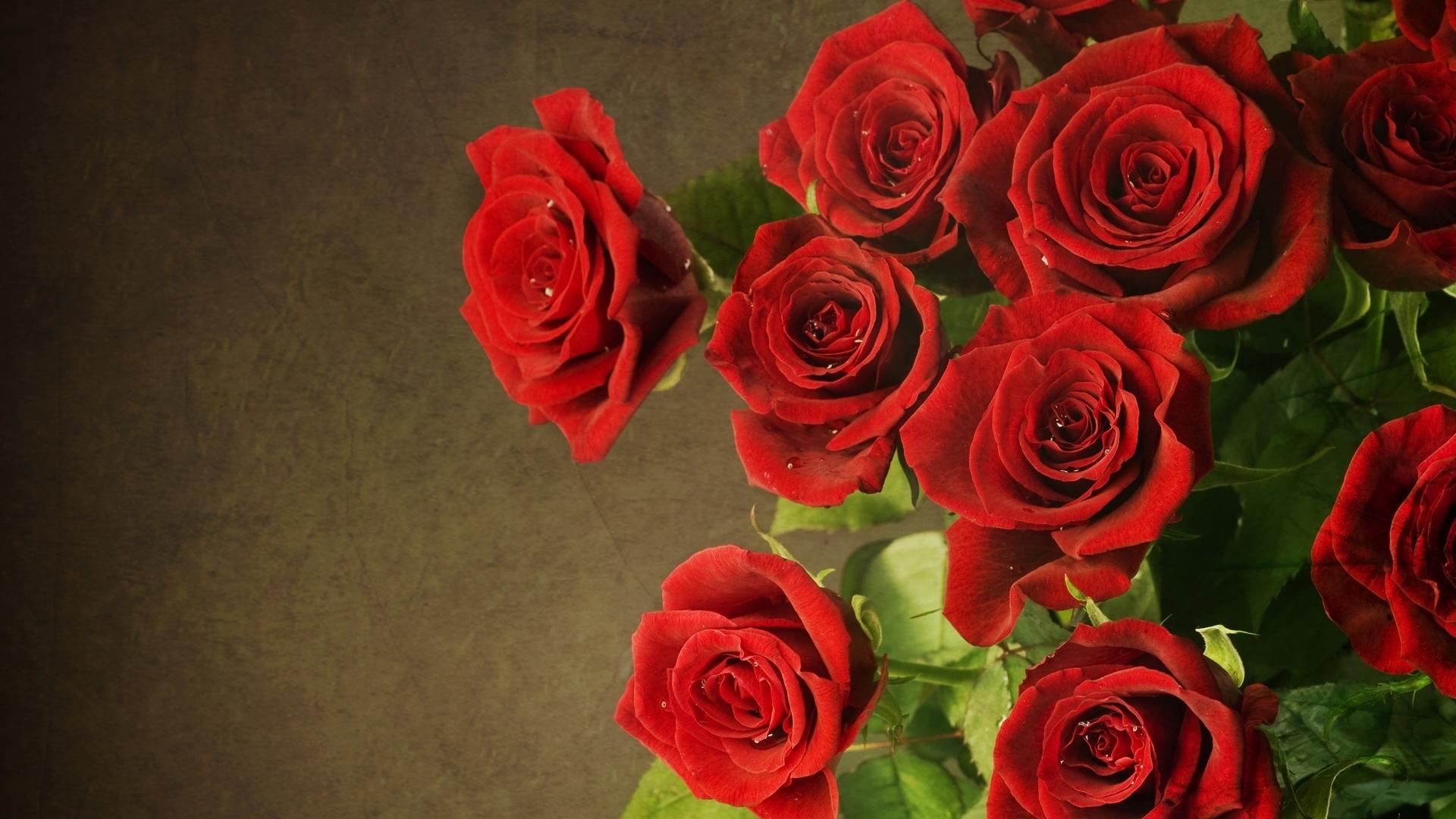 49136 скачать обои Растения, Цветы, Розы - заставки и картинки бесплатно