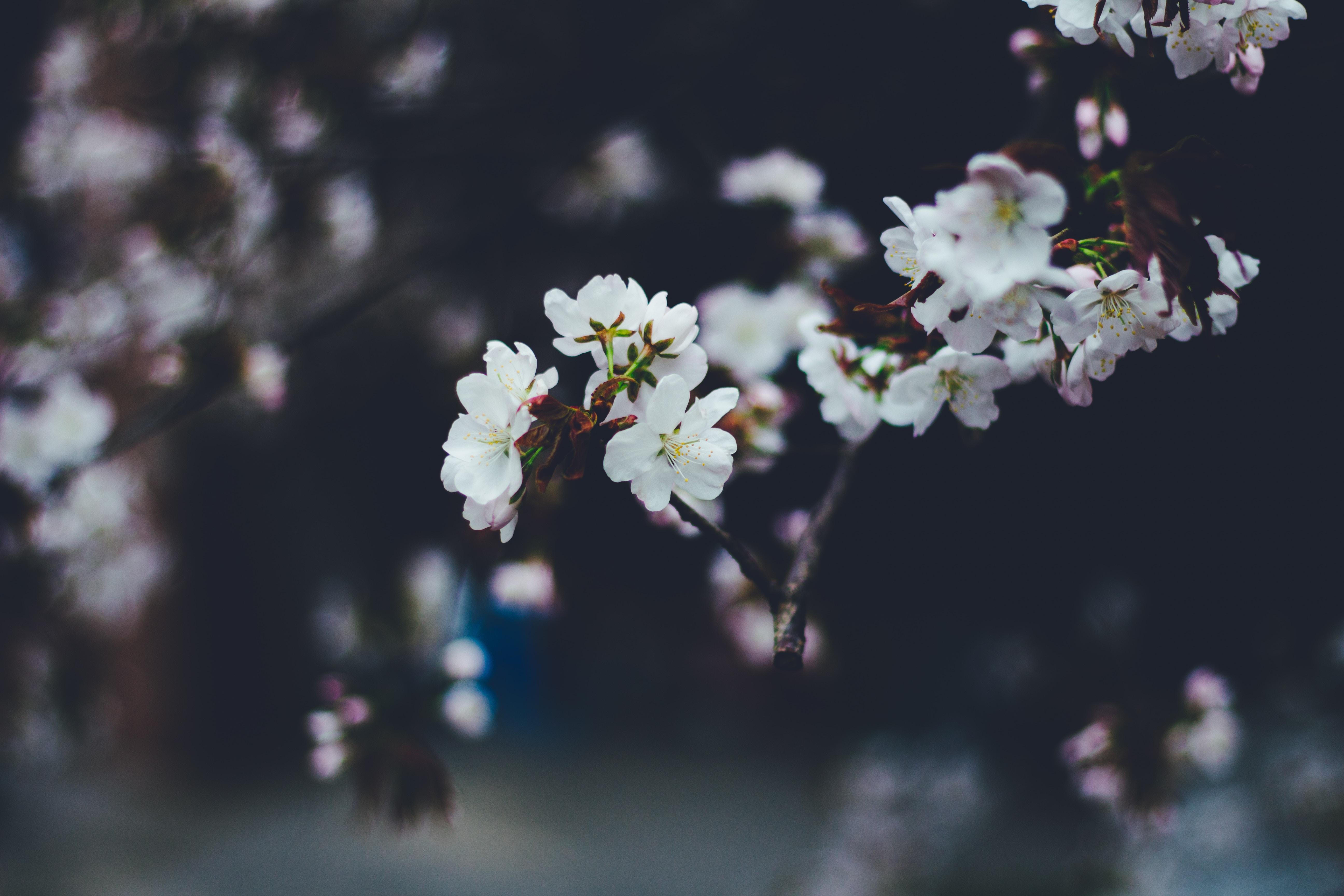 90579 скачать обои Цветы, Макро, Размытость, Ветки, Цветение, Весна - заставки и картинки бесплатно