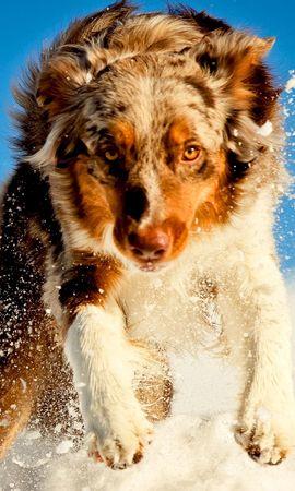 46499 baixar papel de parede Animais, Cães - protetores de tela e imagens gratuitamente