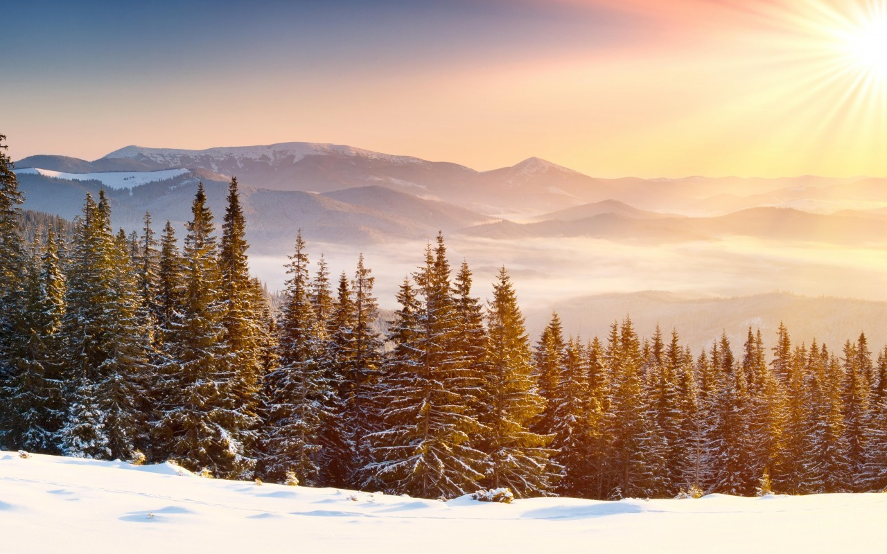 44252 download wallpaper Landscape, Winter, Nature, Trees, Snow screensavers and pictures for free