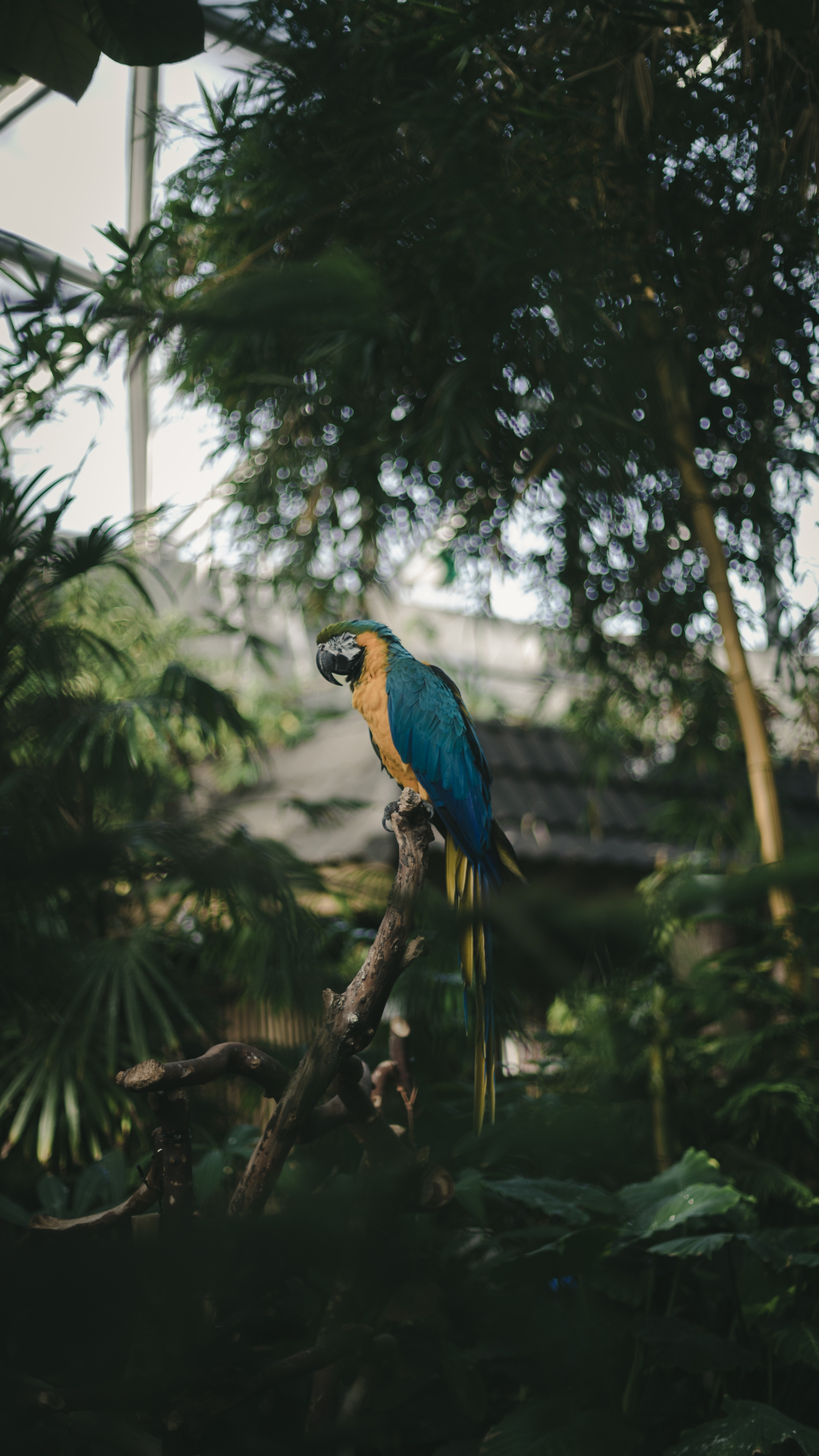 115532 Screensavers and Wallpapers Parrots for phone. Download Animals, Parrots, Palms, Bird, Color, Tropics, Coloured, Jungle, Macaw pictures for free