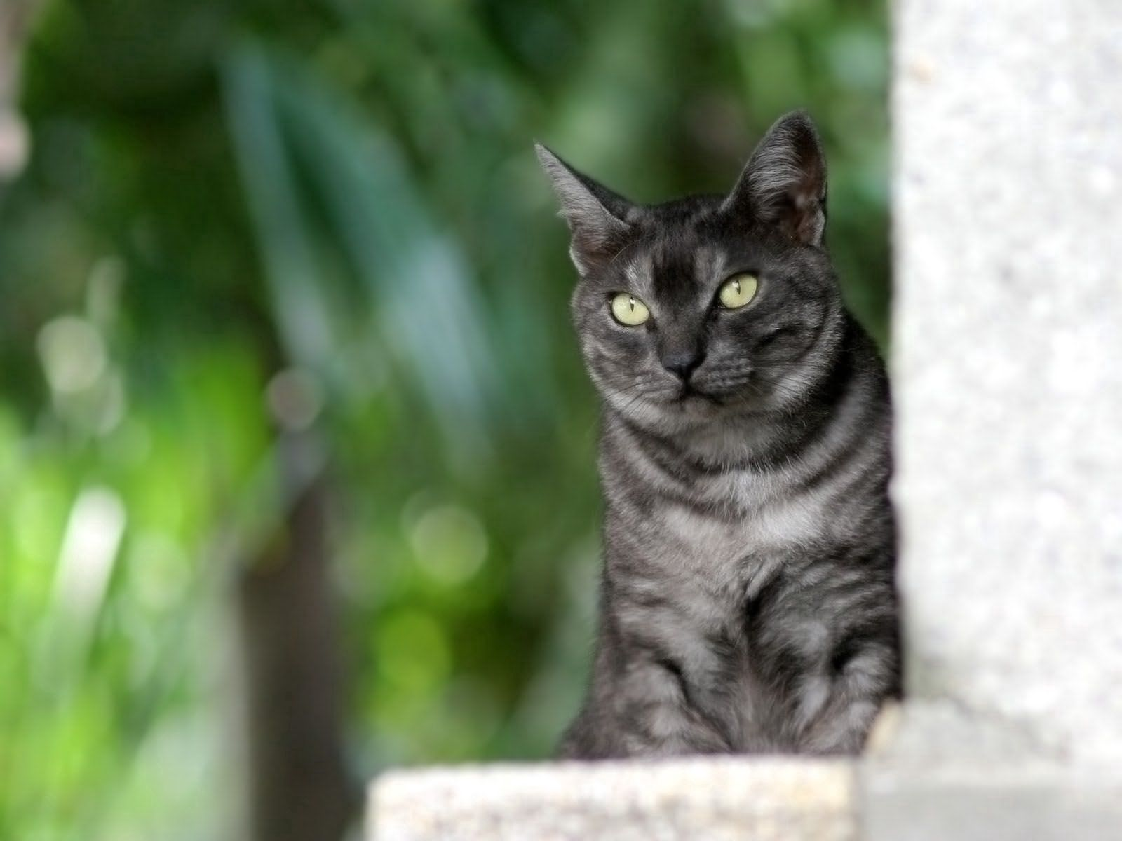 99603 download wallpaper Animals, Cat, Peek Out, Look Out, Sit, Dark screensavers and pictures for free