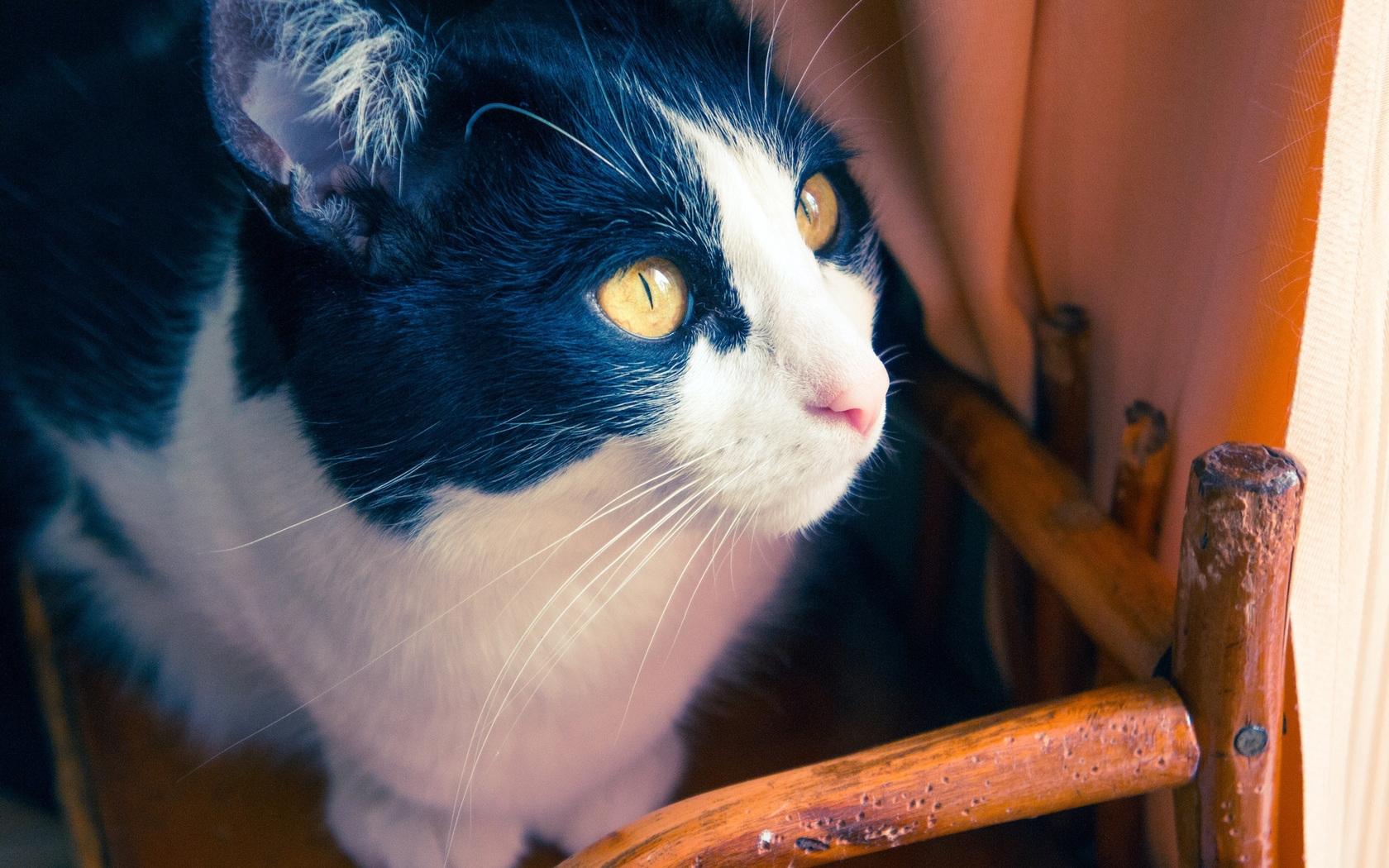 24713 скачать обои Животные, Кошки (Коты, Котики) - заставки и картинки бесплатно