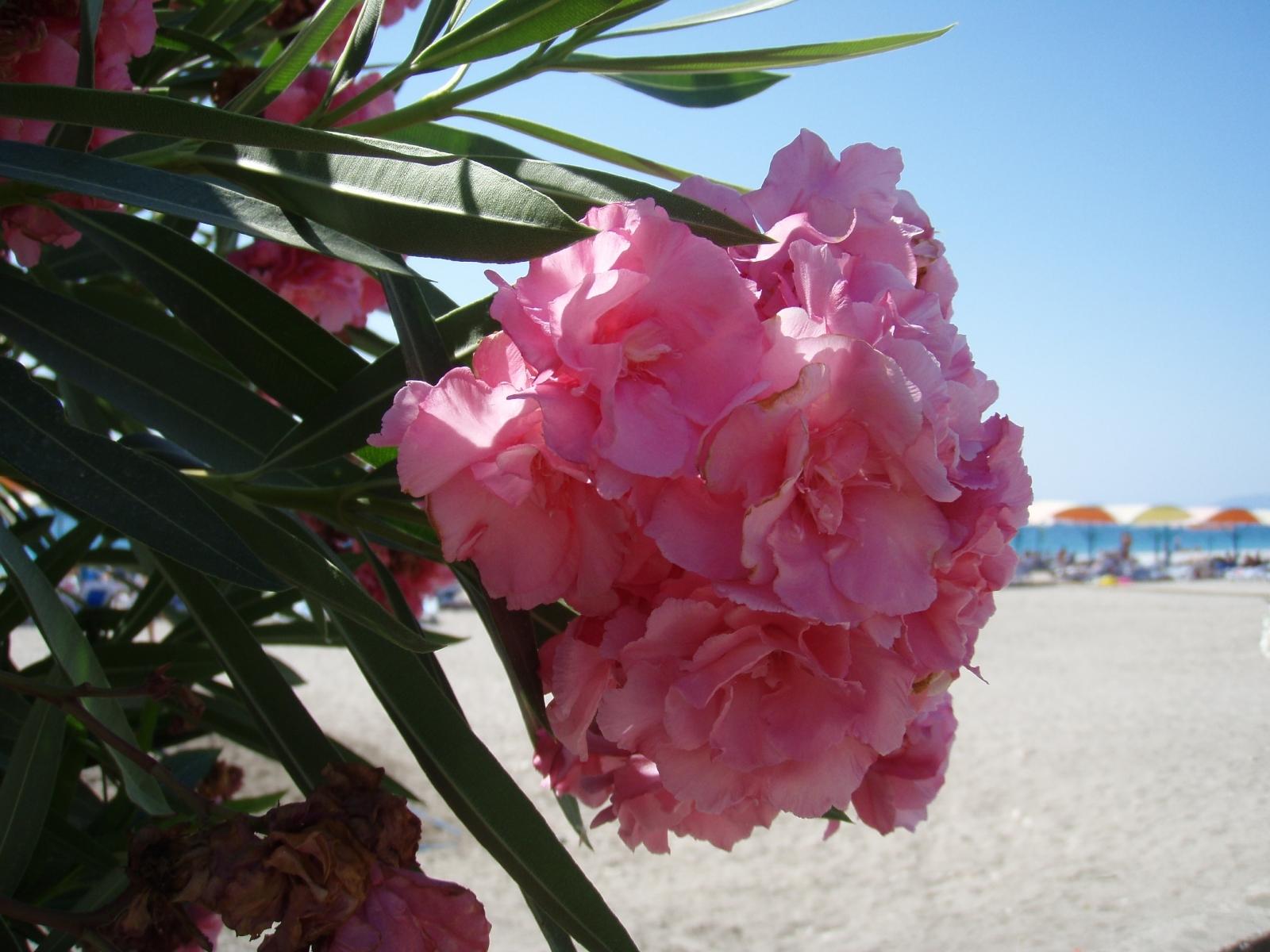 6210 скачать обои Растения, Цветы - заставки и картинки бесплатно