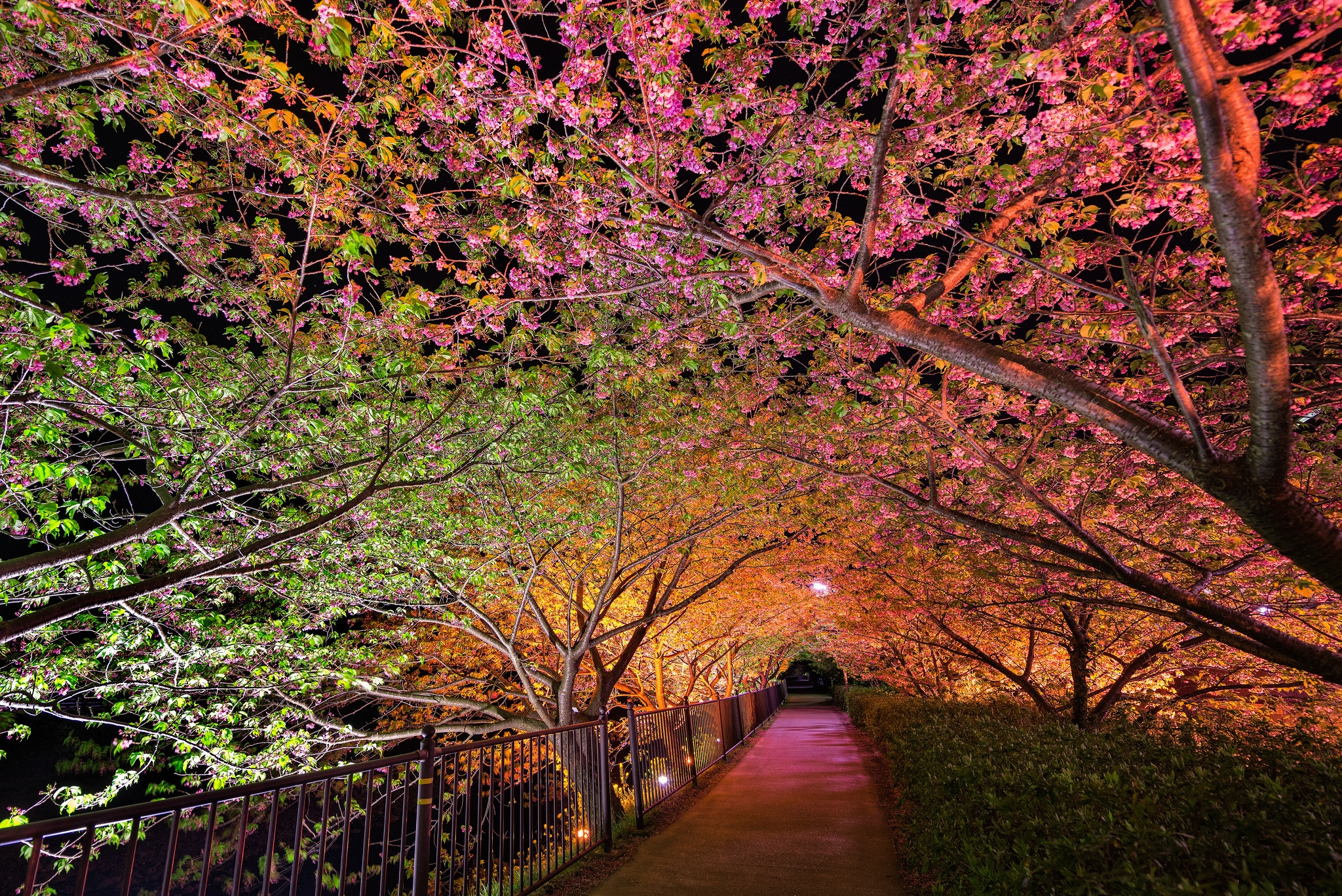 139362 download wallpaper Nature, Night, Spring, Park, Alley, Backlight, Illumination screensavers and pictures for free