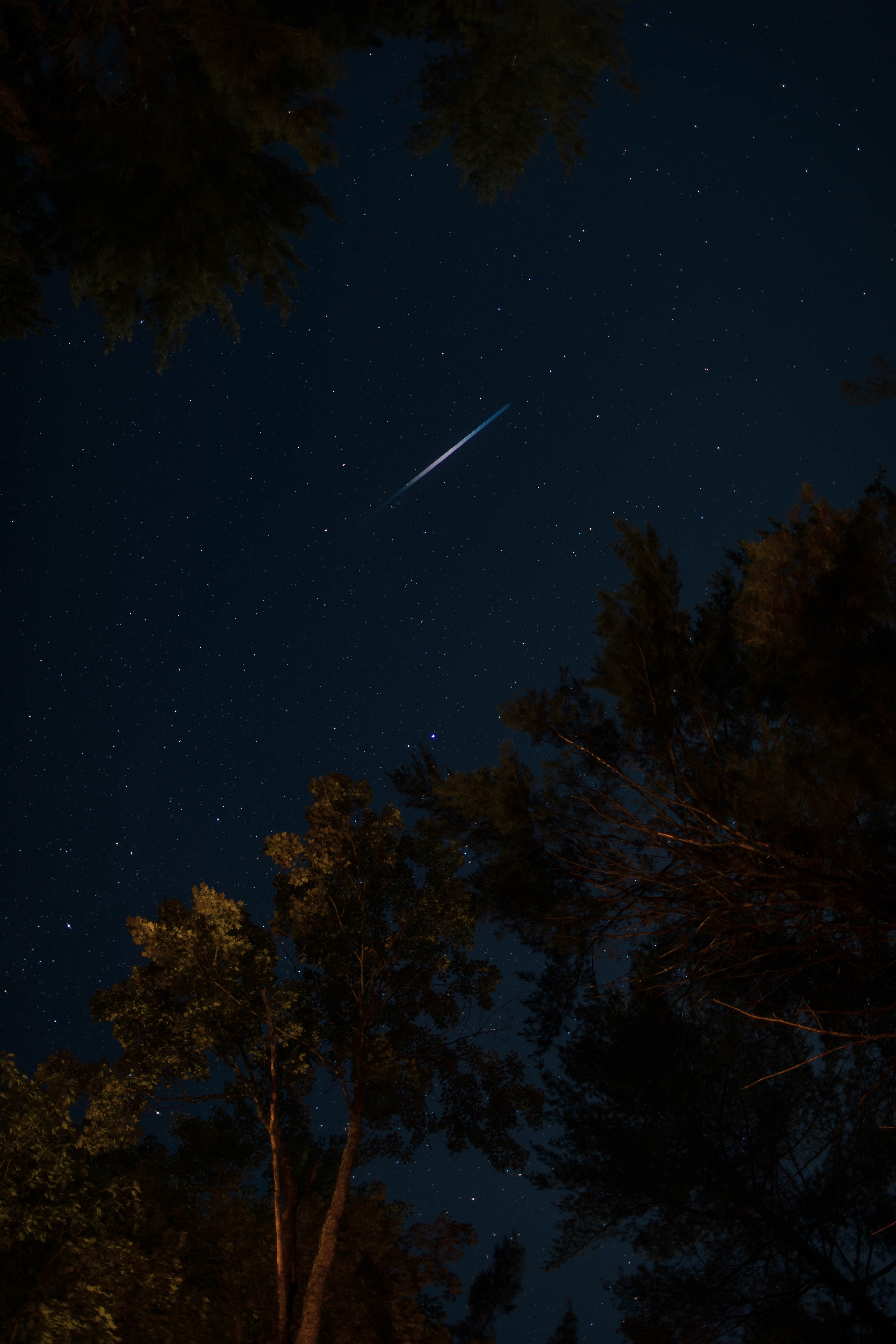 128848 Screensavers and Wallpapers Night for phone. Download Dark, Trees, Night, Starry Sky, Stars pictures for free