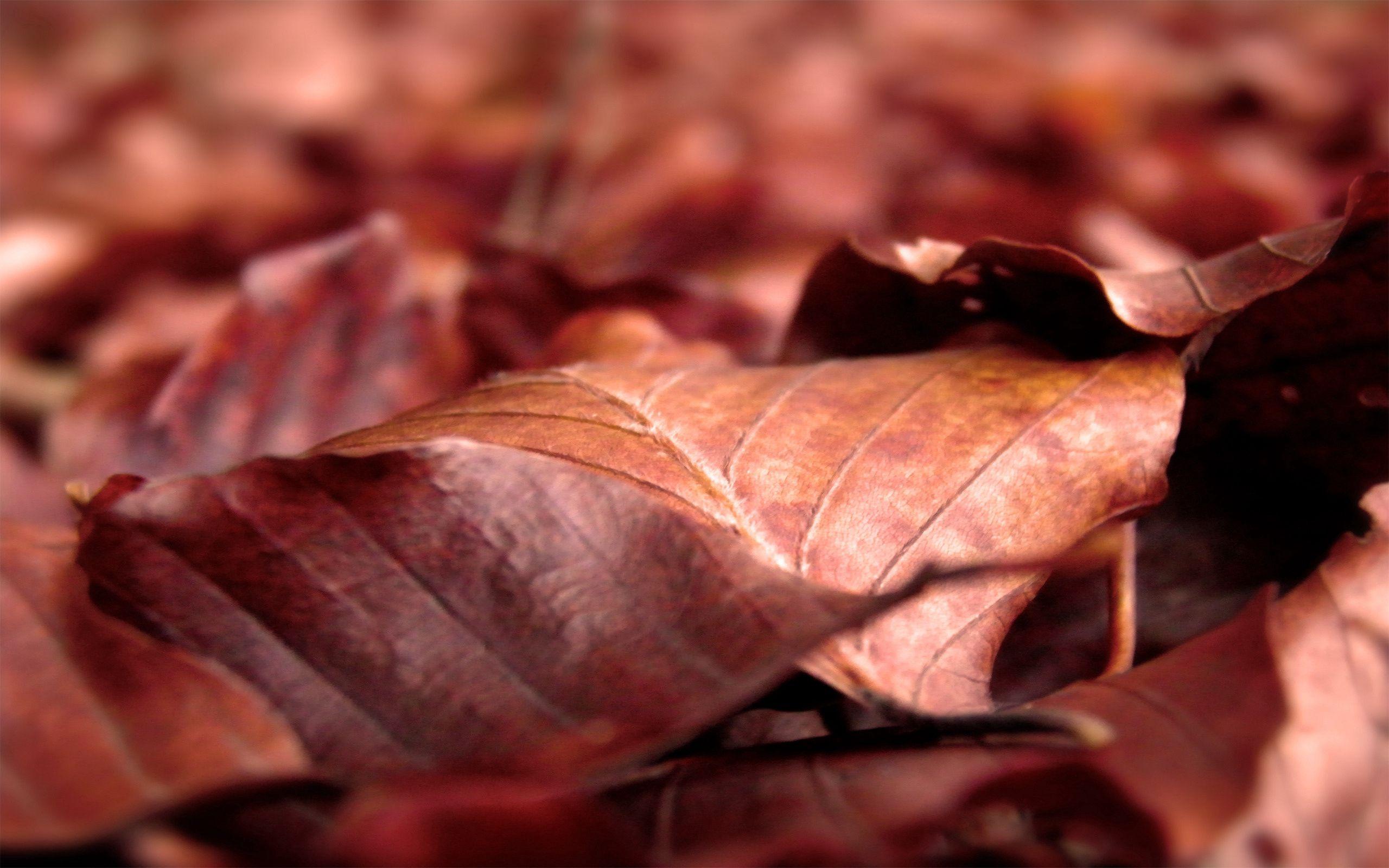 144278 скачать обои Макро, Листья, Сухой, Сморщенный, Осень - заставки и картинки бесплатно