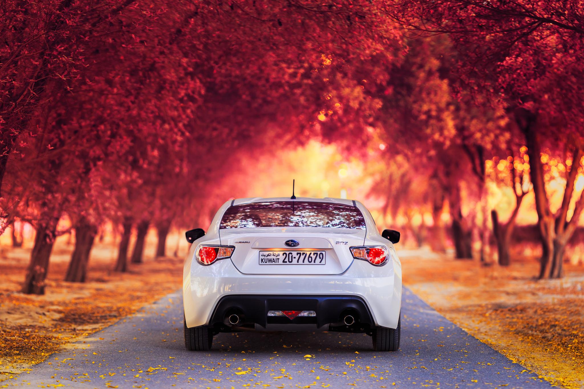 120081 скачать обои Тачки (Cars), Субару (Subaru), Вид Сзади, Осень, Машины - заставки и картинки бесплатно