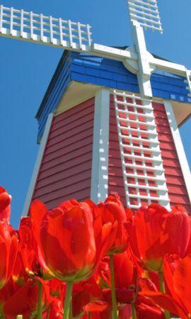 5027 télécharger le fond d'écran Plantes, Paysage, Fleurs, Tulipes - économiseurs d'écran et images gratuitement