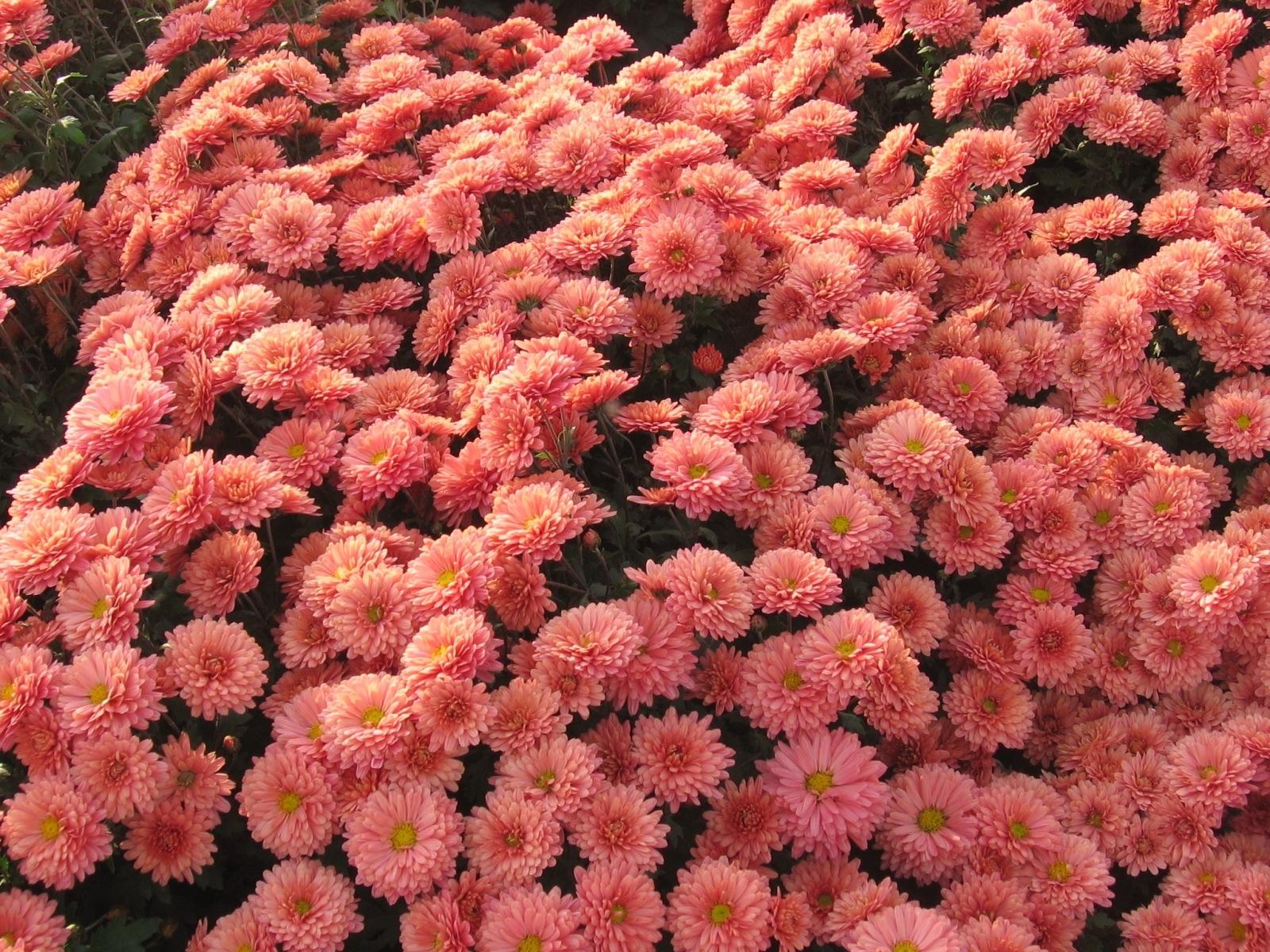 9514 descargar fondo de pantalla Plantas, Flores: protectores de pantalla e imágenes gratis