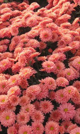 9514 скачать обои Растения, Цветы - заставки и картинки бесплатно