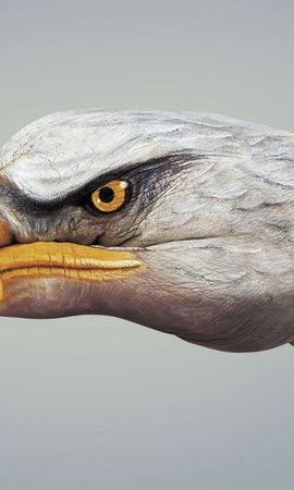 2074 download wallpaper Funny, Birds, Eagles screensavers and pictures for free