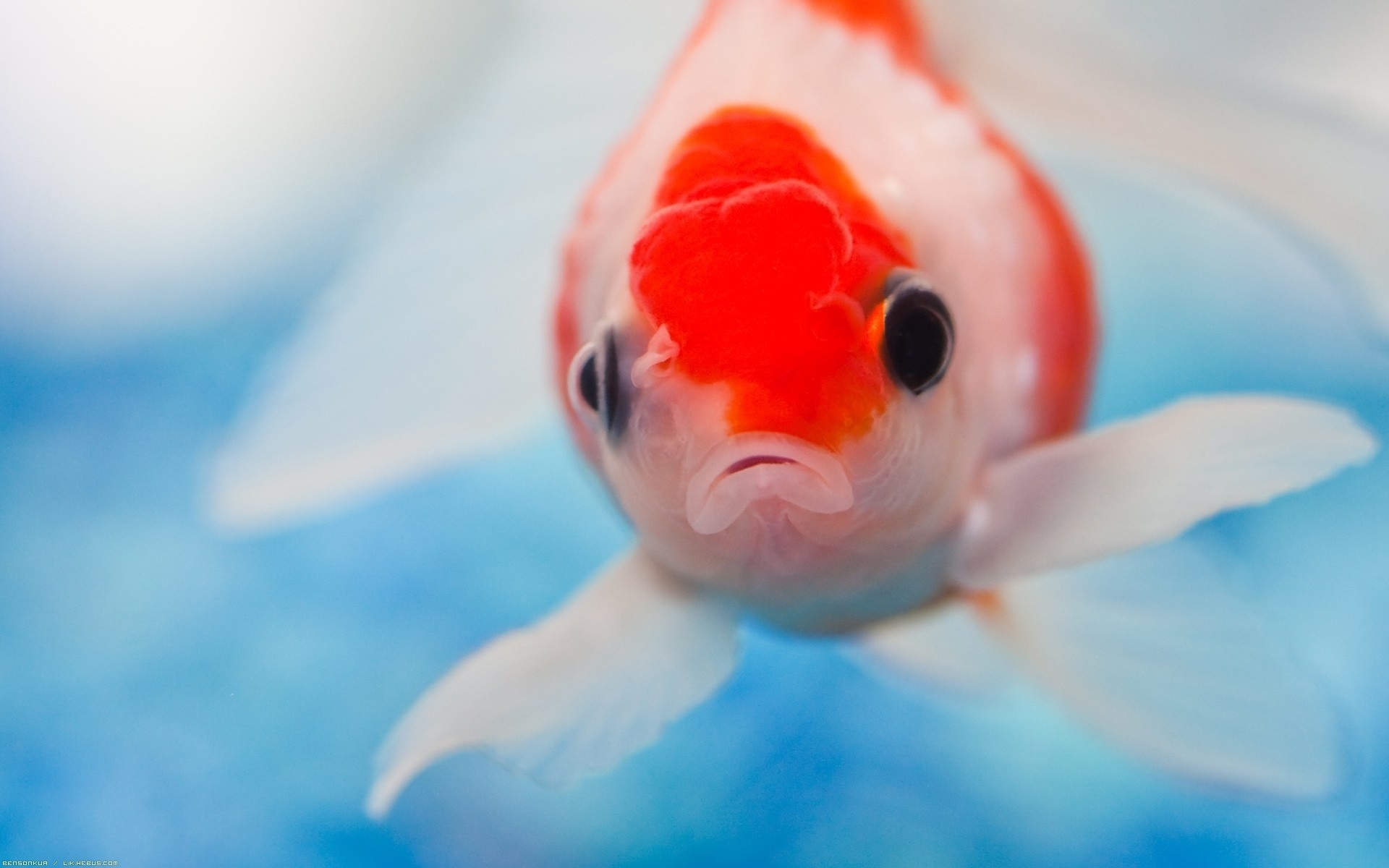 40503 download wallpaper Animals, Fishes screensavers and pictures for free
