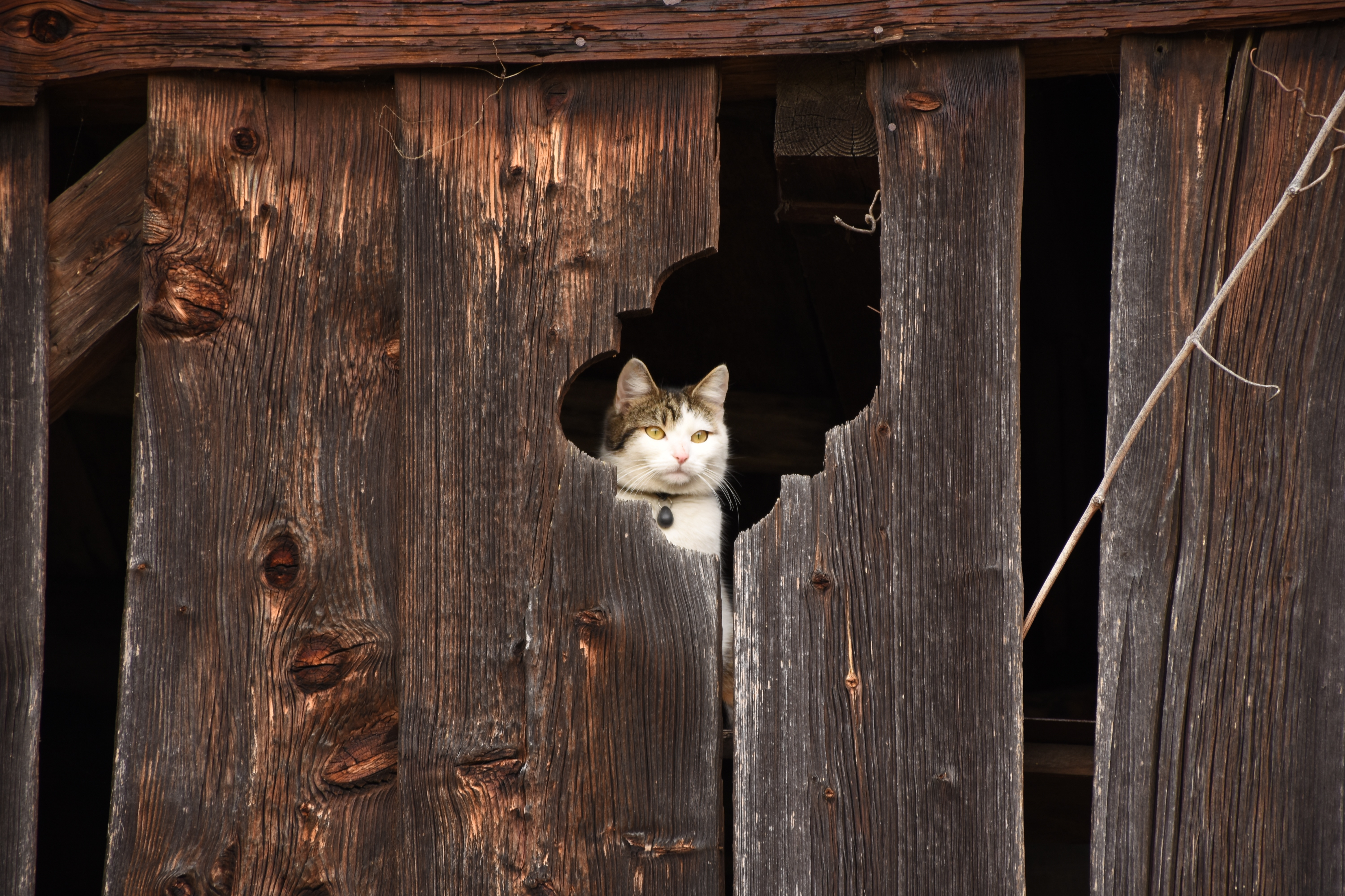 148969 download wallpaper Animals, Cat, Fence, Muzzle, Peek Out, Look Out screensavers and pictures for free