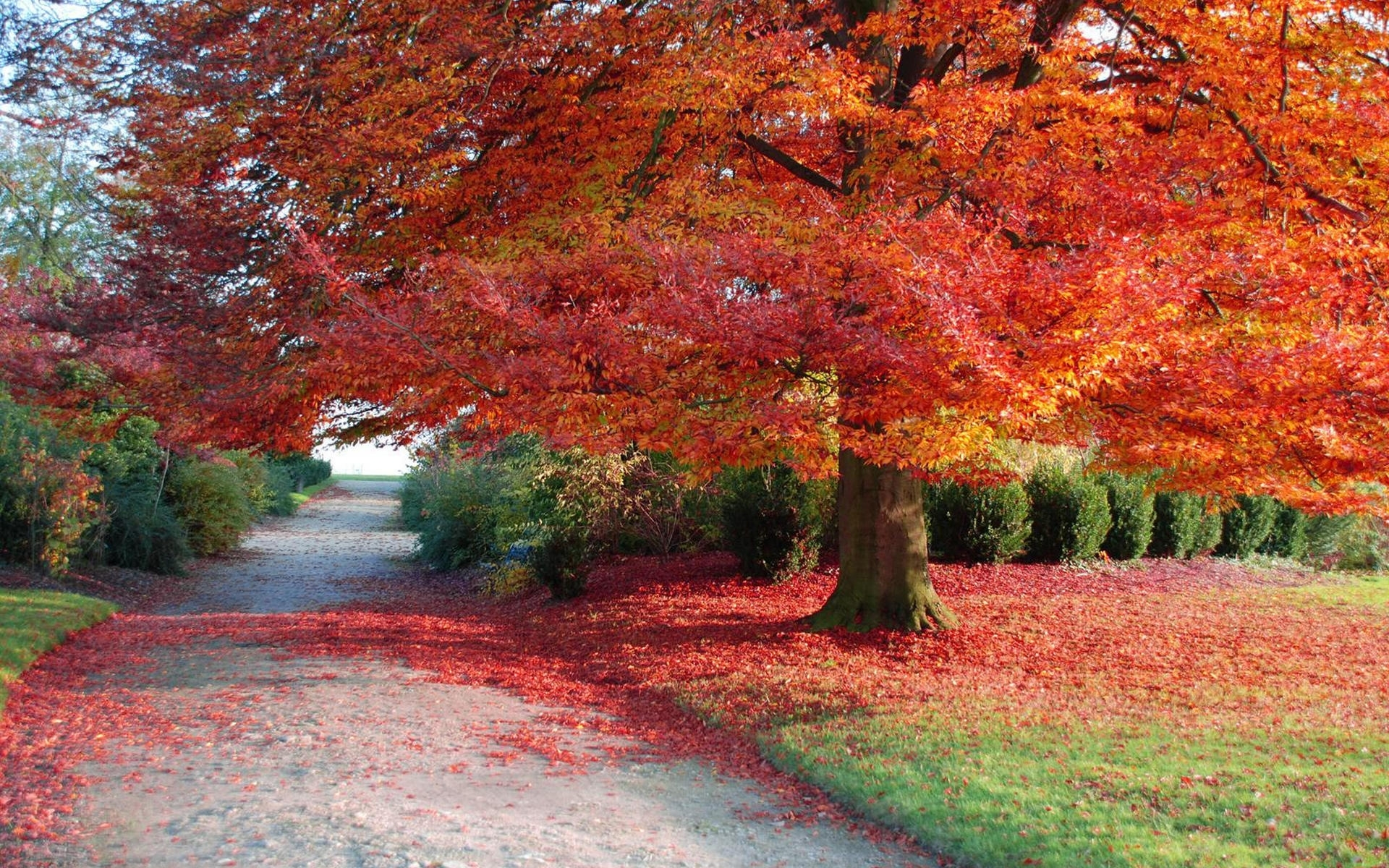 26794 download wallpaper Landscape, Trees, Autumn screensavers and pictures for free