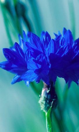35696 скачать обои Растения, Цветы - заставки и картинки бесплатно