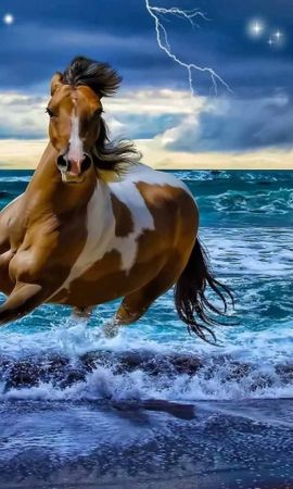 41017 download wallpaper Animals, Horses screensavers and pictures for free