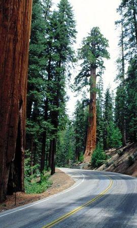 28048 скачать обои Пейзаж, Деревья, Дороги - заставки и картинки бесплатно