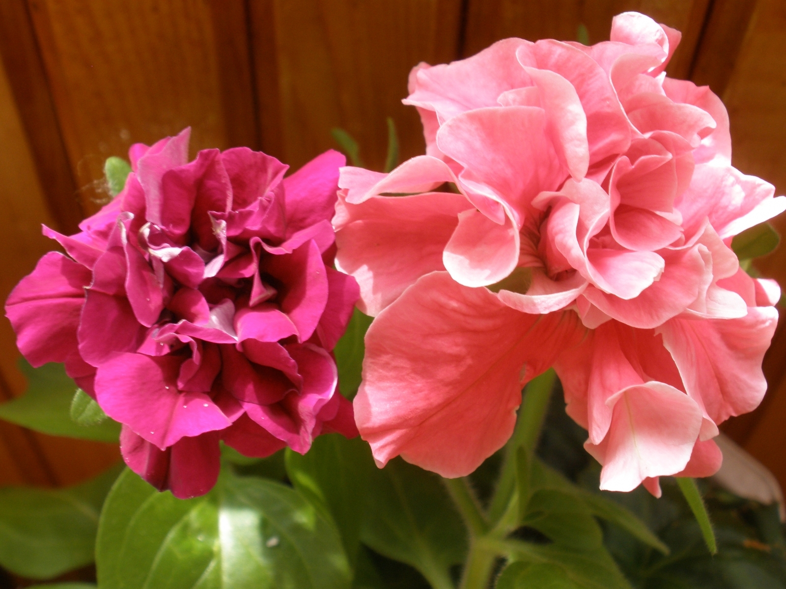 3796 download wallpaper Plants, Flowers screensavers and pictures for free