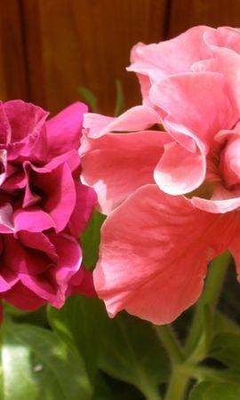 3796 descargar fondo de pantalla Plantas, Flores: protectores de pantalla e imágenes gratis
