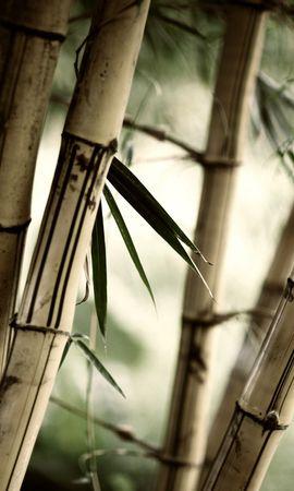 37310 скачать обои Растения, Деревья - заставки и картинки бесплатно