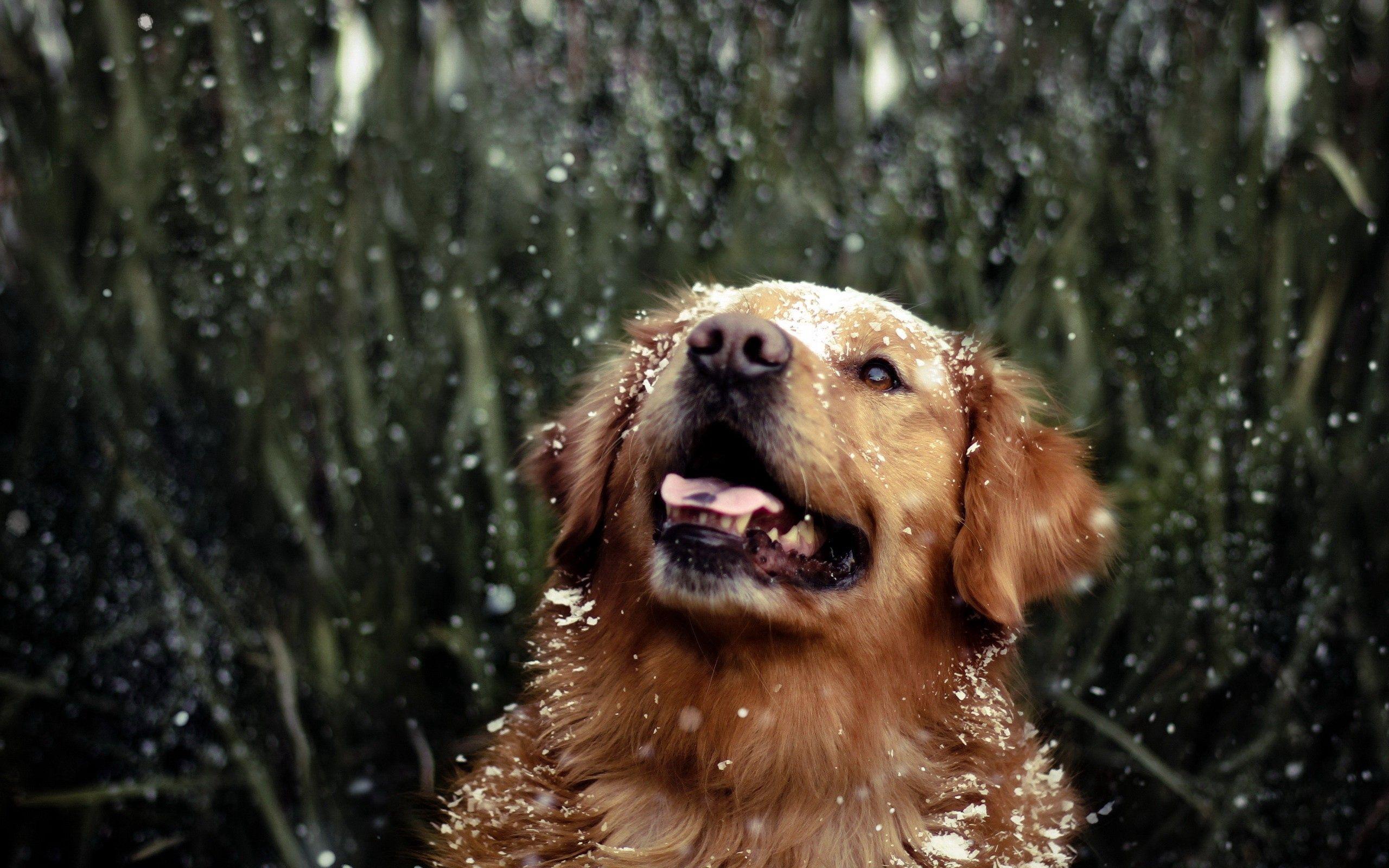 Handy-Wallpaper Tiere, Grass, Drops, Hund, Spielerisch, Spielerische kostenlos herunterladen.
