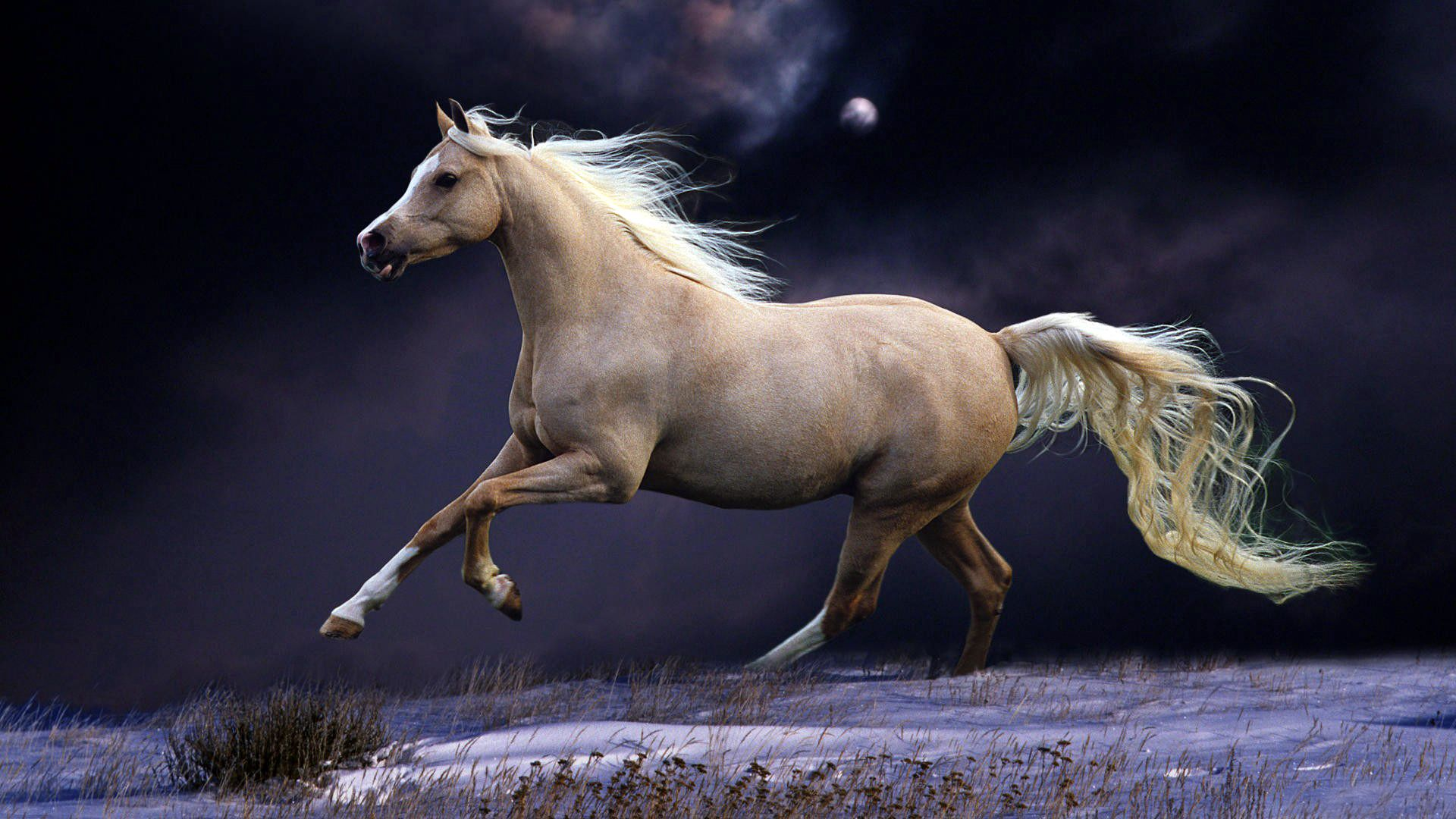81322 Screensavers and Wallpapers Beautiful for phone. Download Animals, Sky, Night, Beautiful, Mane, Horse, Run, Running pictures for free