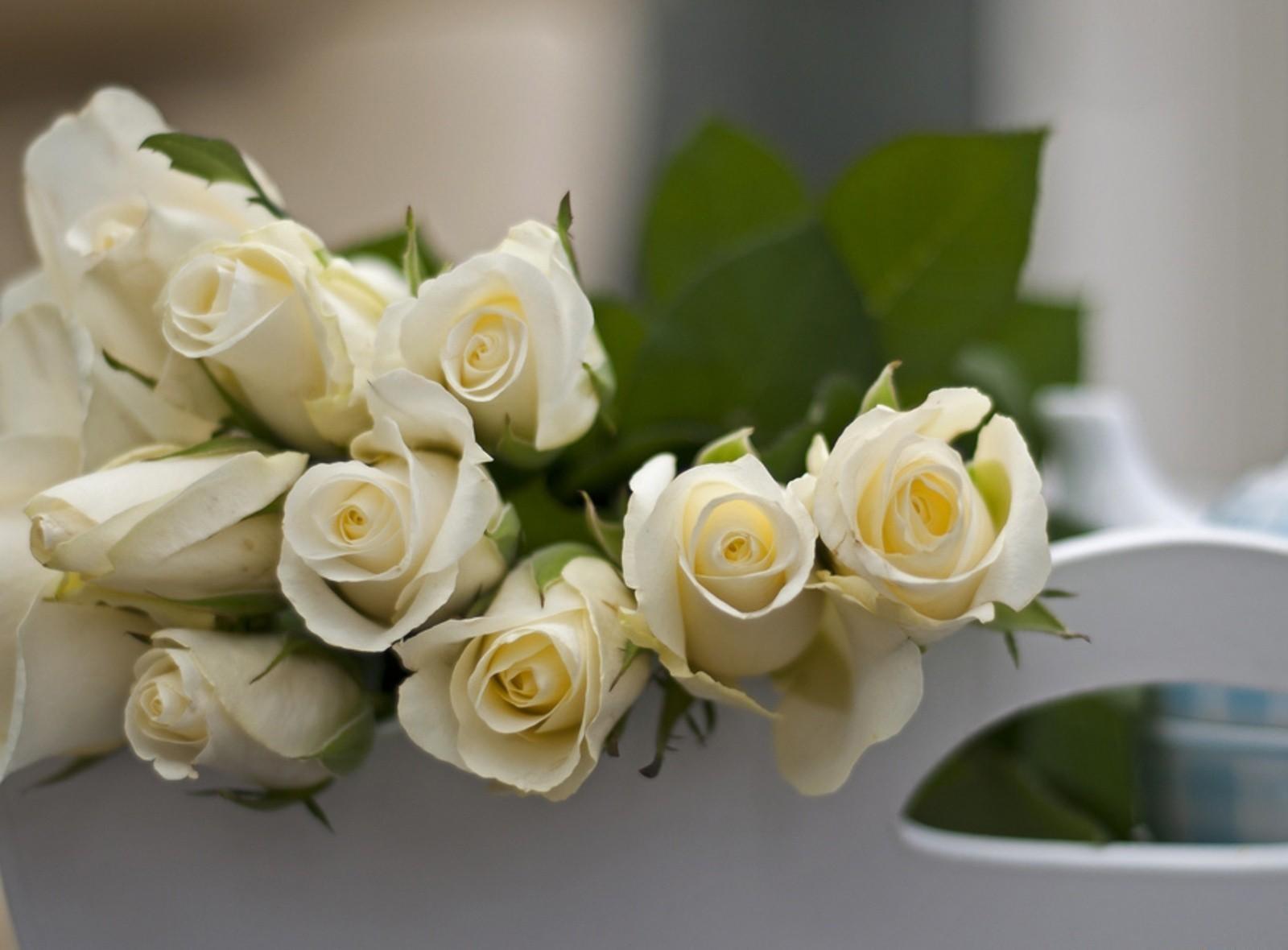 104847 скачать Белые обои на телефон бесплатно, Бутоны, Цветы, Розы, Лежать Белые картинки и заставки на мобильный