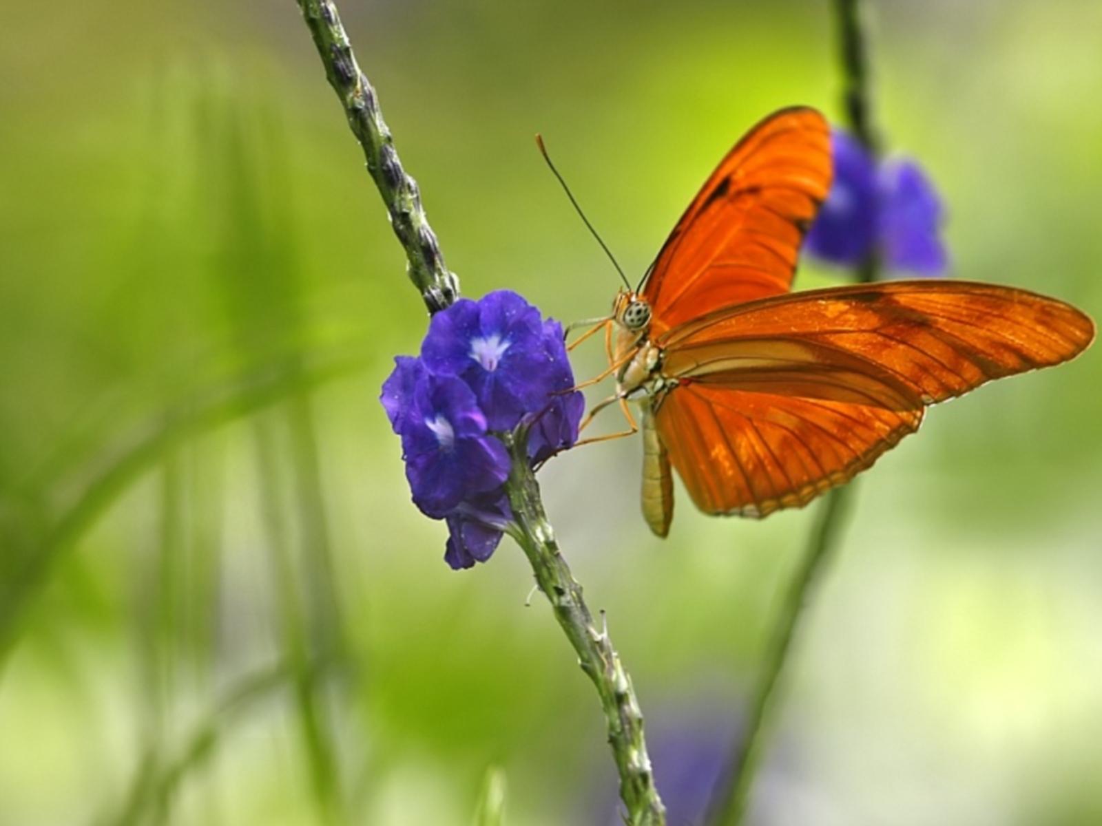 3724 скачать обои Бабочки, Насекомые - заставки и картинки бесплатно