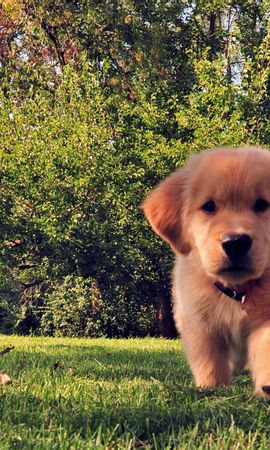 151547 download wallpaper Animals, Funny, Summer, Dog, Puppy, Grass screensavers and pictures for free
