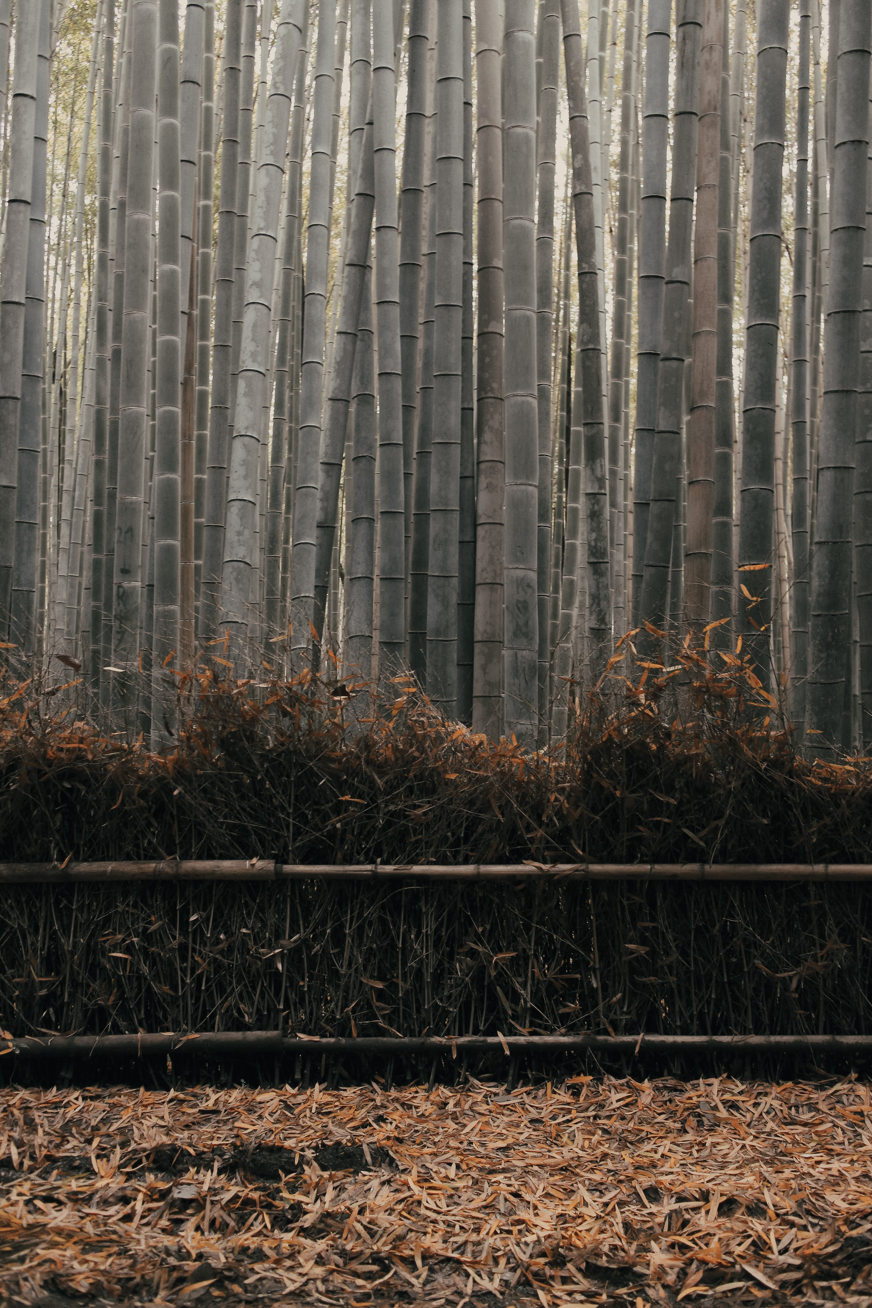 57858 download wallpaper Nature, Bamboo, Stems, Plant screensavers and pictures for free