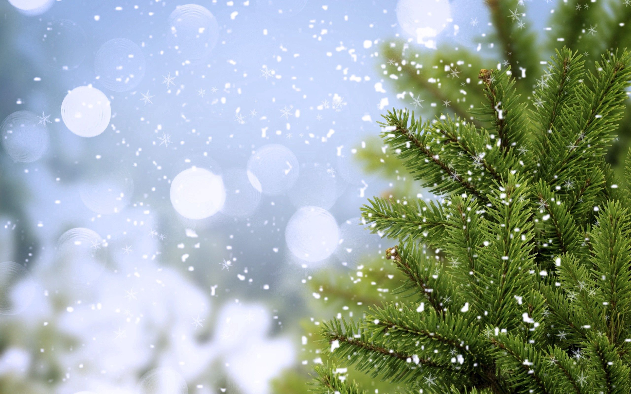 51080 Screensavers and Wallpapers Spruce for phone. Download Nature, Snow, Wood, Tree, Spruce, Fir pictures for free
