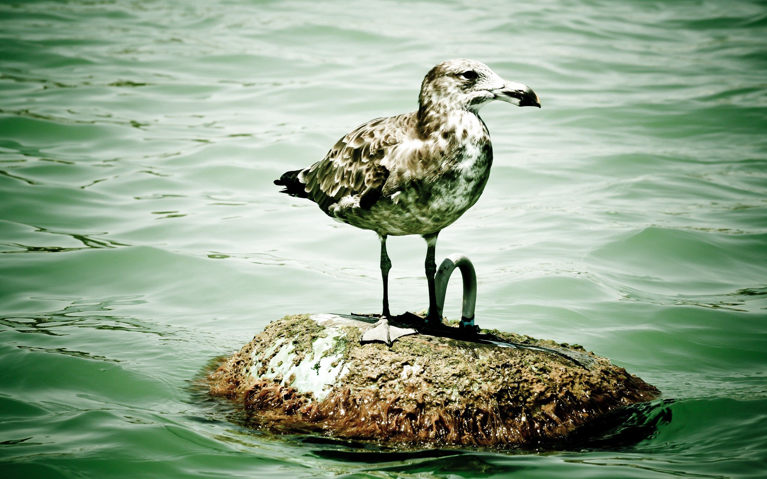 107666 download wallpaper Animals, Gull, Seagull, Island, Islet, Sit, Bird screensavers and pictures for free