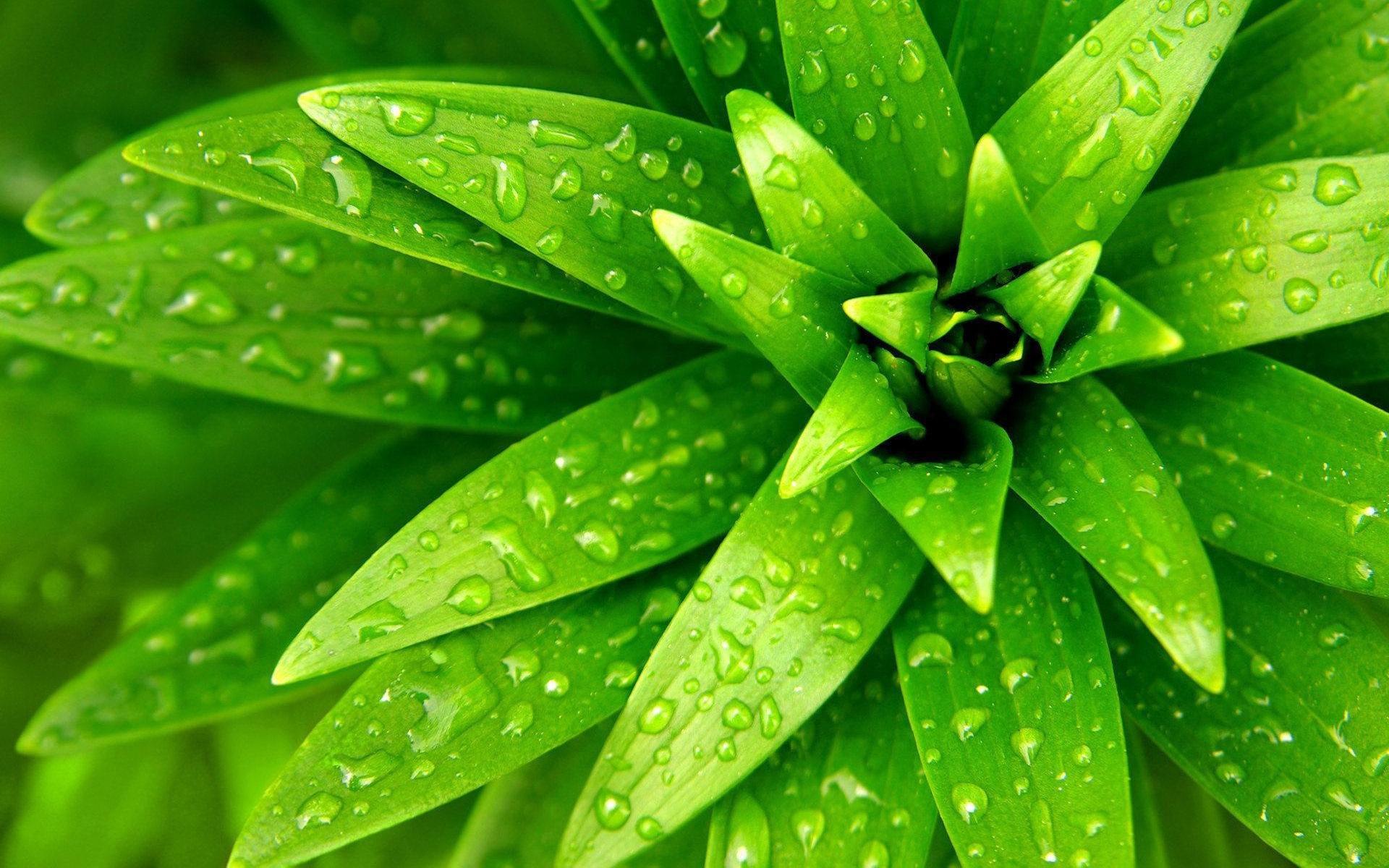 24276 скачать обои Растения, Листья, Капли - заставки и картинки бесплатно