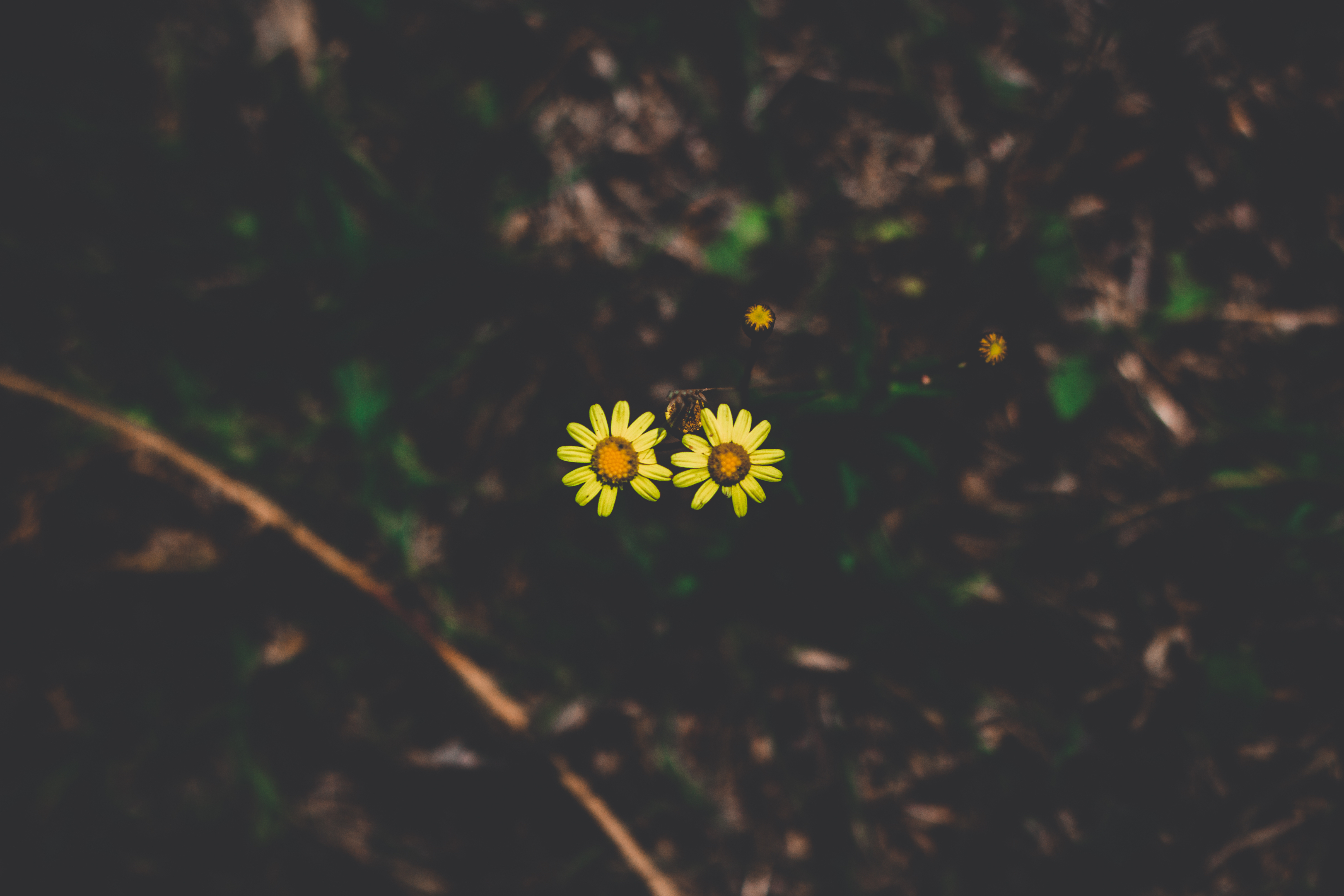 123323 download wallpaper Dark, Couple, Pair, Stem, Stalk, Dark Background, Flowers screensavers and pictures for free