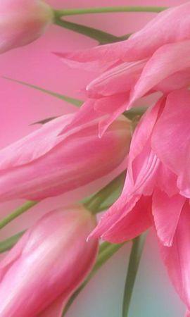 41087 télécharger le fond d'écran Plantes, Fleurs - économiseurs d'écran et images gratuitement