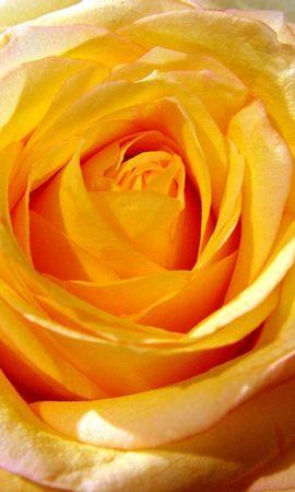 26784 скачать обои Растения, Розы - заставки и картинки бесплатно