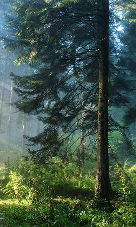 21848 скачать обои Пейзаж, Деревья, Дороги, Солнце - заставки и картинки бесплатно