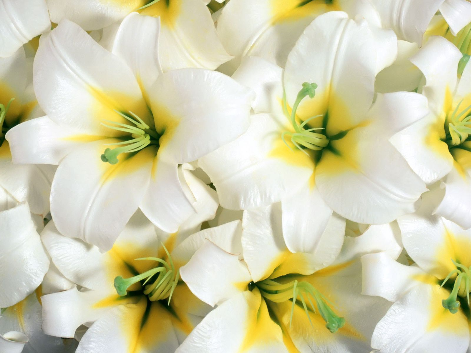 83356 download wallpaper Flowers, Lilies, Close-Up, Stamens screensavers and pictures for free