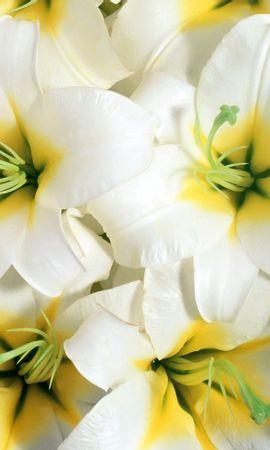 83356 скачать Белые обои на телефон бесплатно, Цветы, Лилии, Тычинки, Крупный План Белые картинки и заставки на мобильный