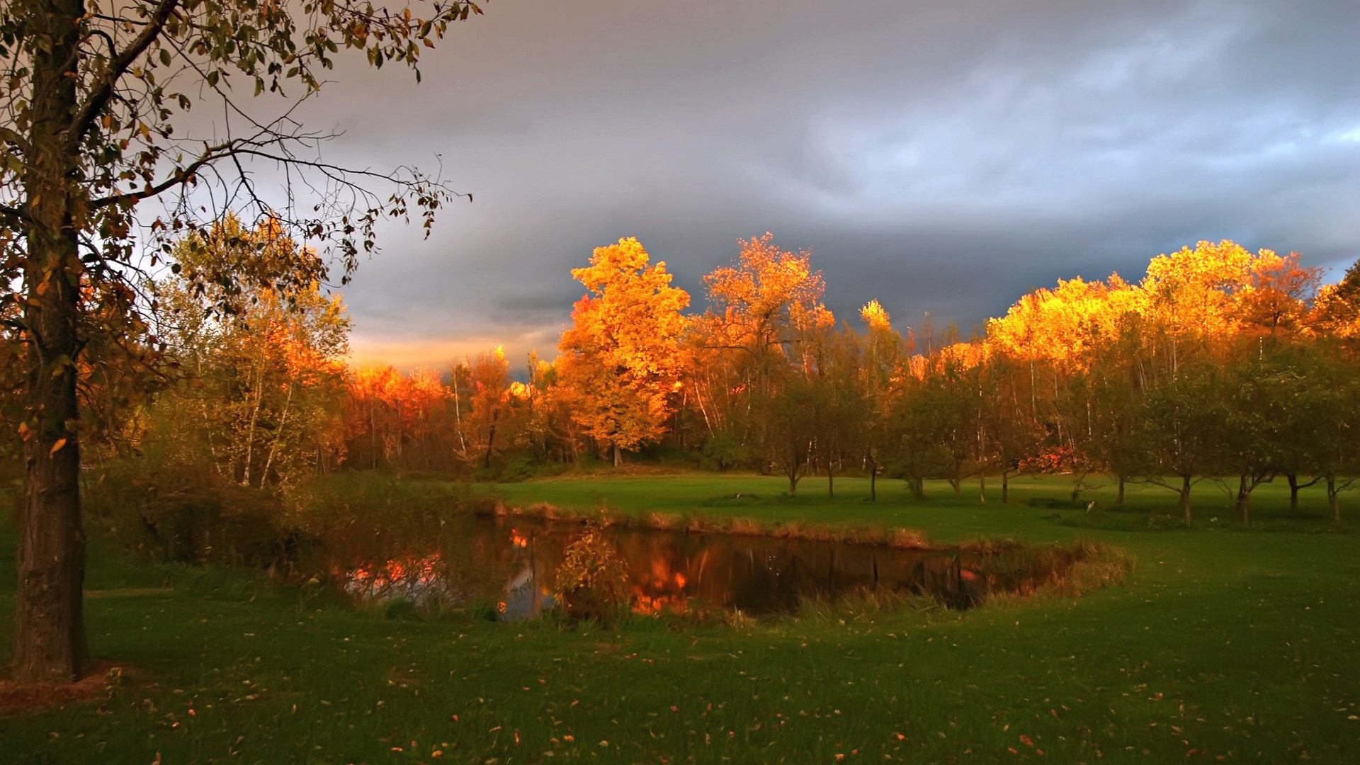 26670 download wallpaper Landscape, Trees, Autumn screensavers and pictures for free