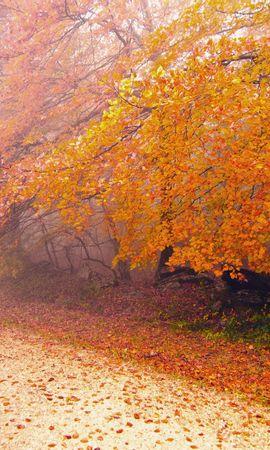 21973 скачать обои Пейзаж, Деревья, Дороги, Осень, Листья - заставки и картинки бесплатно