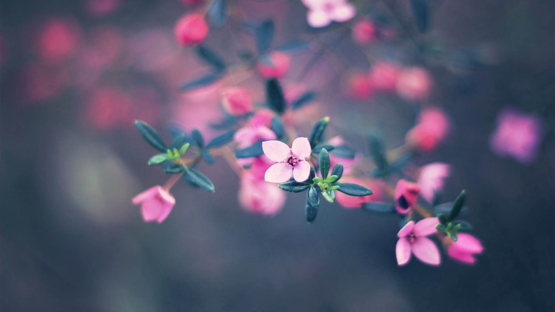 69117 download wallpaper Flowers, Macro, Blur, Smooth, Bloom, Flowering screensavers and pictures for free