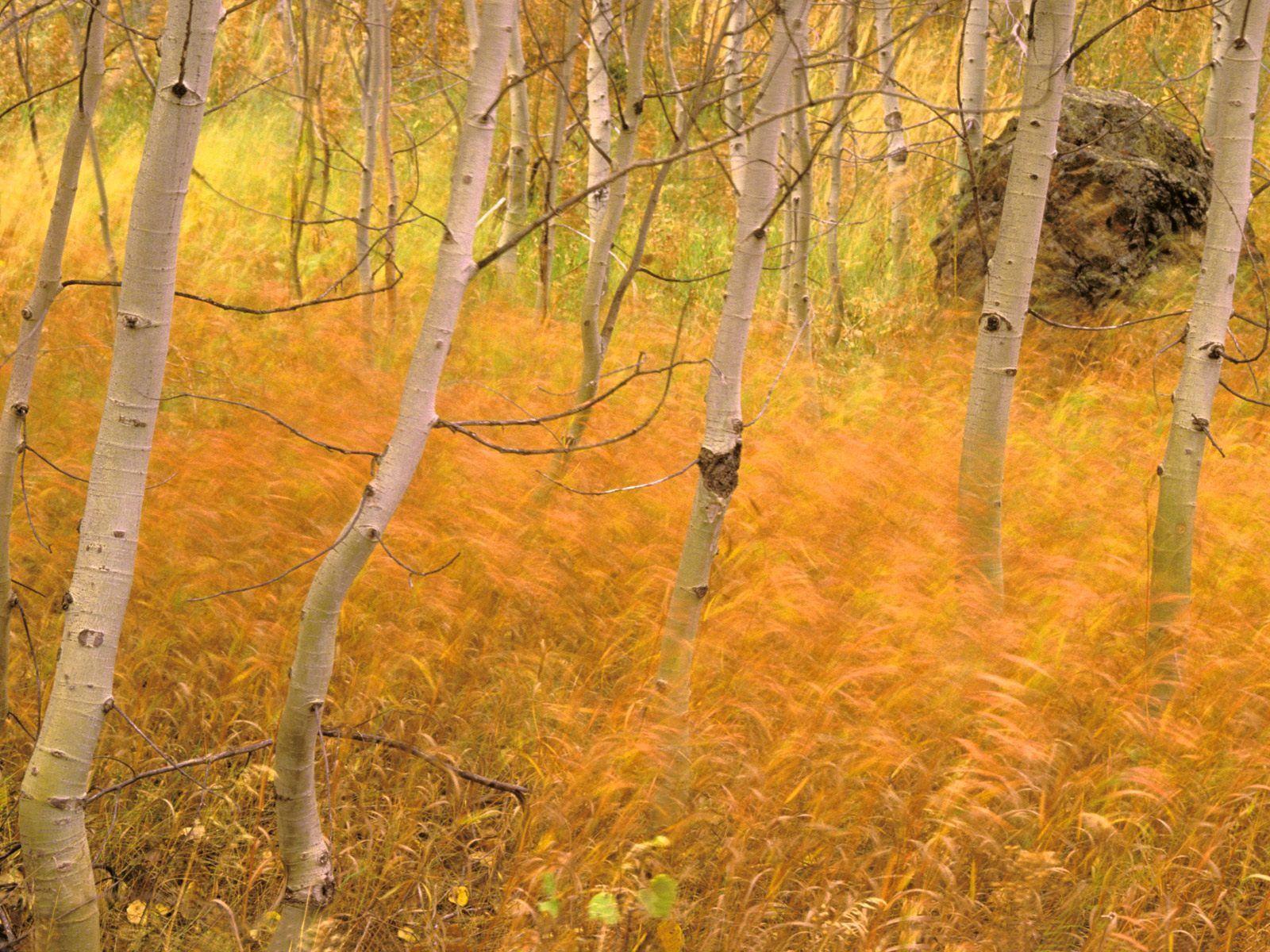 102870 Hintergrundbild 240x400 kostenlos auf deinem Handy, lade Bilder Natur, Bäume, Grass, Herbst, Wald 240x400 auf dein Handy herunter