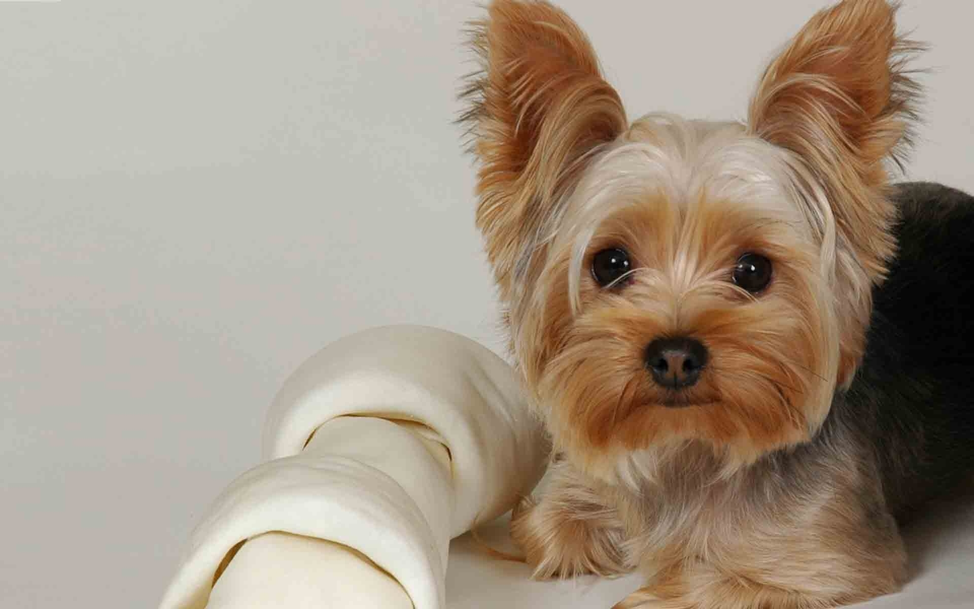 36271 descargar fondo de pantalla Animales, Perros: protectores de pantalla e imágenes gratis