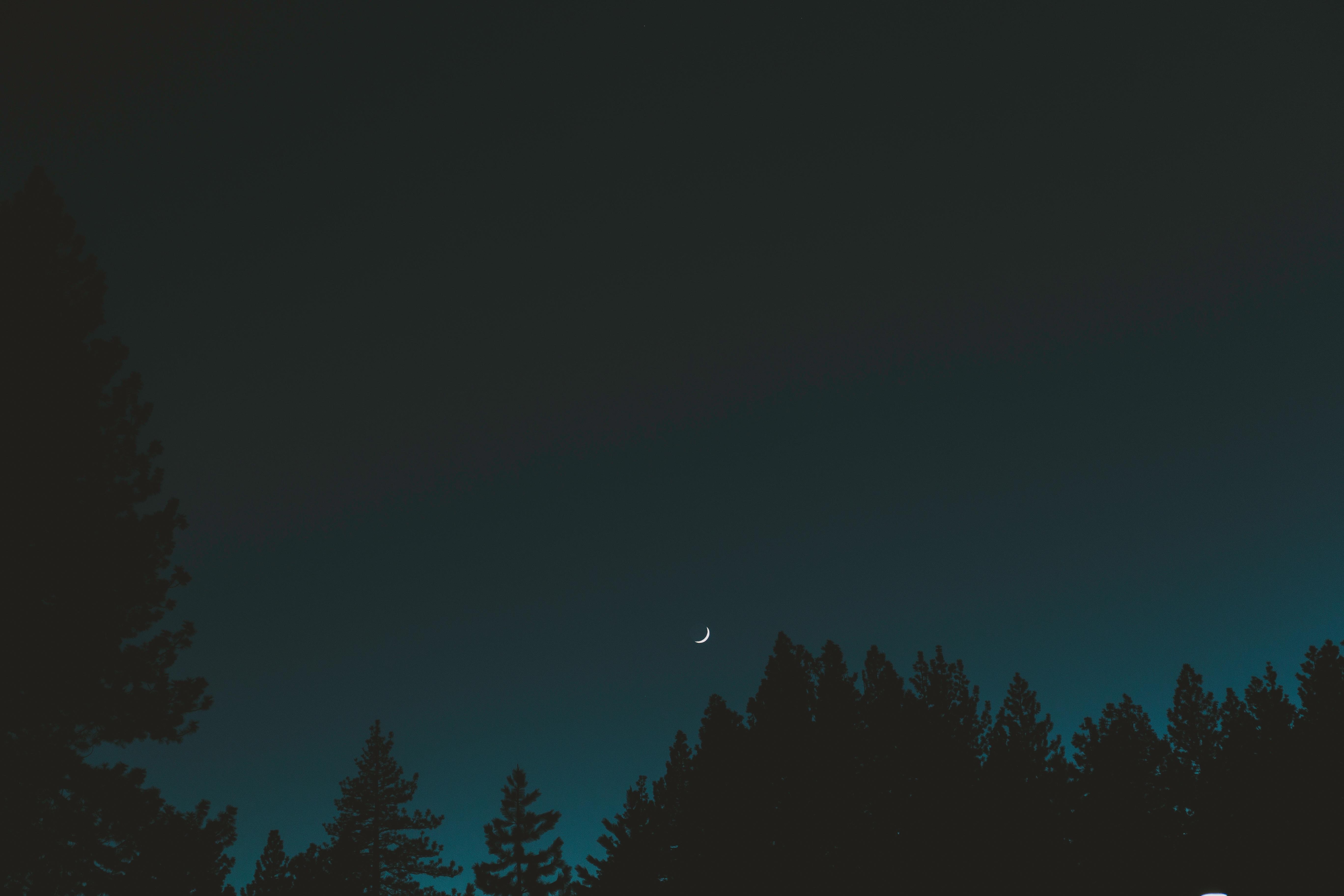 129157 скачать обои Темные, Луна, Небо, Ночь, Деревья, Полумесяц - заставки и картинки бесплатно