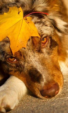 45816 baixar papel de parede Animais, Cães - protetores de tela e imagens gratuitamente