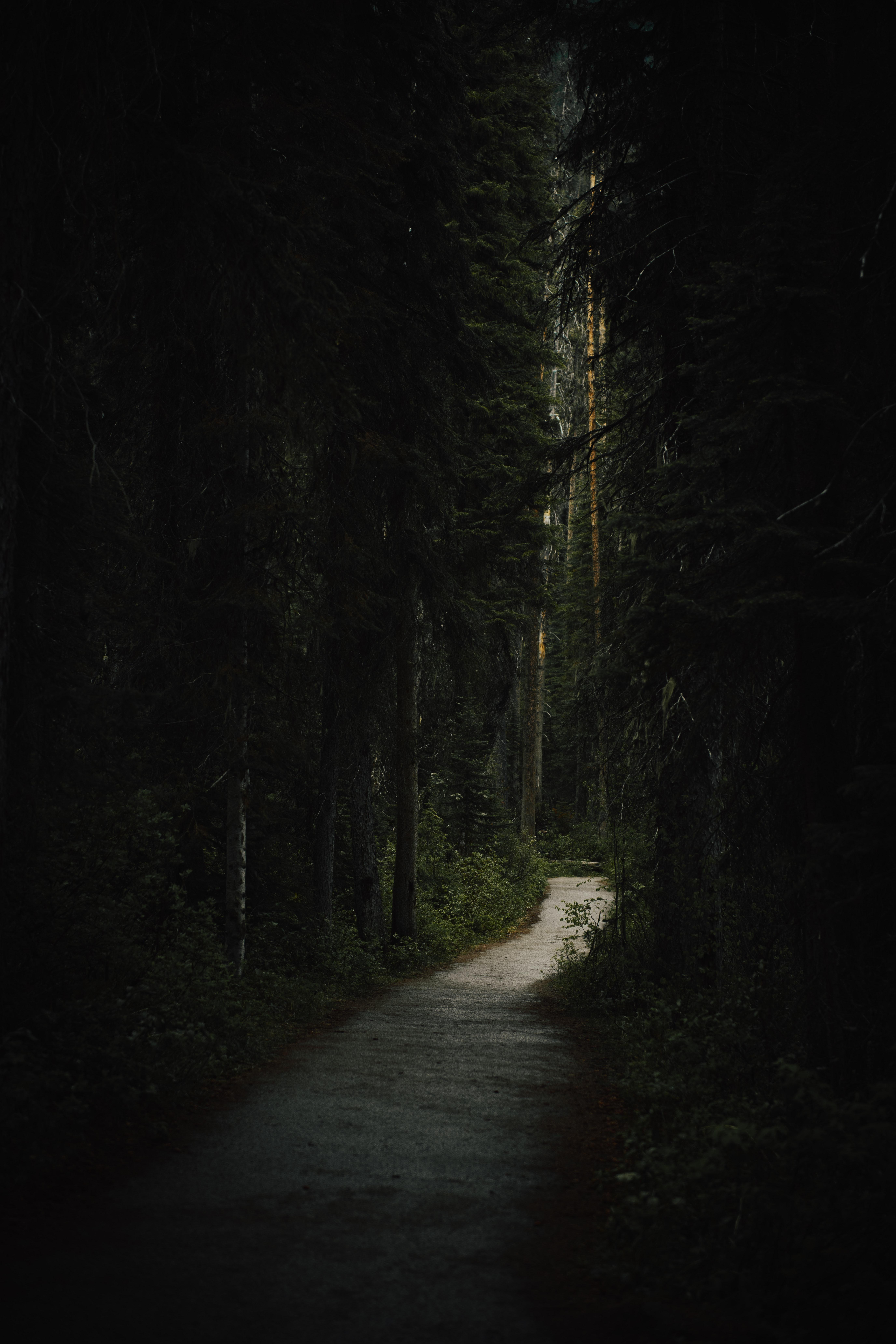 128311 скачать обои Лес, Природа, Деревья, Темный, Тропинка - заставки и картинки бесплатно