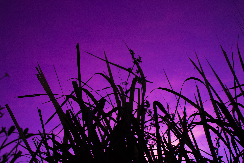 106186 скачать обои Фиолетовый, Трава, Небо, Темные, Темный, Сумерки - заставки и картинки бесплатно